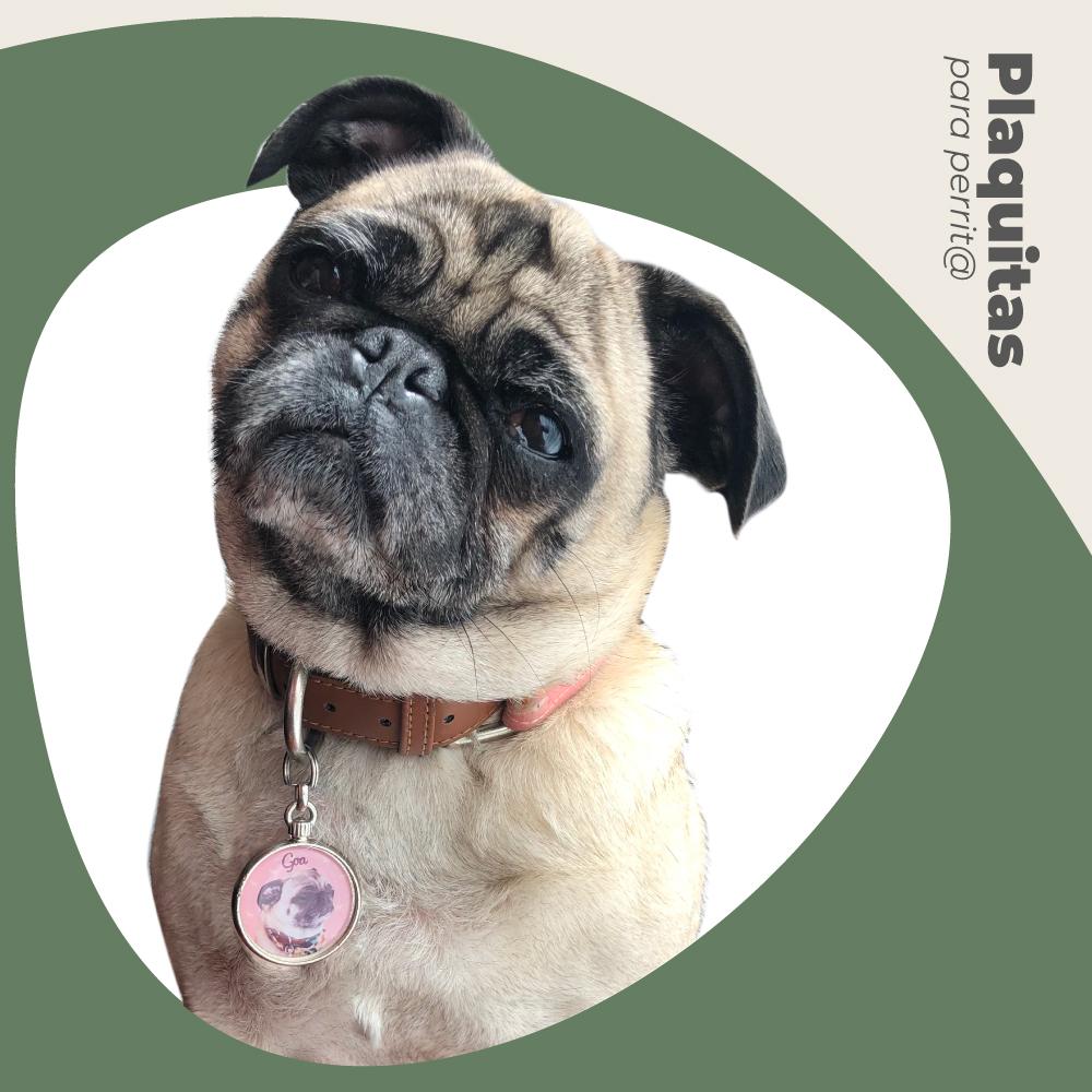 foto de un perro con placa de identificación
